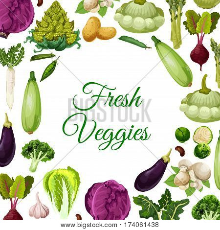 Fresh vegetables, mushroom and beans poster, vegetarian food menu background. Cabbage, broccoli, potato, eggplant and garlic, champignon, asparagus, bean and pea pod, beet and daikon radish, zucchini