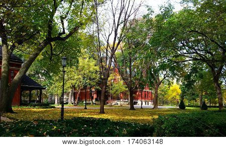 Fall Foliage Treeline behind a red brick building in Chicago in Autumn