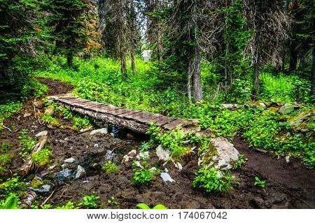 Wooden Bridge over a Muddy Creek on a Hike to Tod Mountain in the Shuswap Highlands of central British Columbia, Canada
