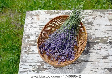bunch fresh medical lavender herb flowers in basket on old wooden used table