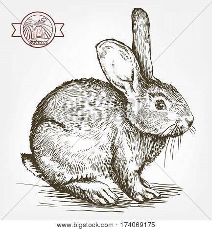 sketch of rabbit drawn by hand on a white background. animal husbandry