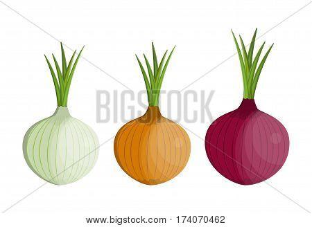 set Fresh Vegetable Onion isolated icon. Onion for farm market, vegetarian salad recipe design. vector illustration in flat style