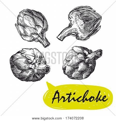 artichoke. set of hand drawn vector sketches on a white background
