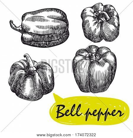 bell pepper. set of hand drawn vector sketches on a white background