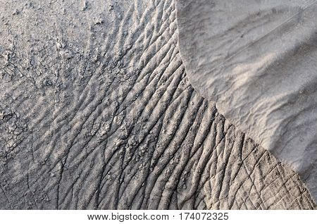 Wrinkly dry mud on a young elephant.
