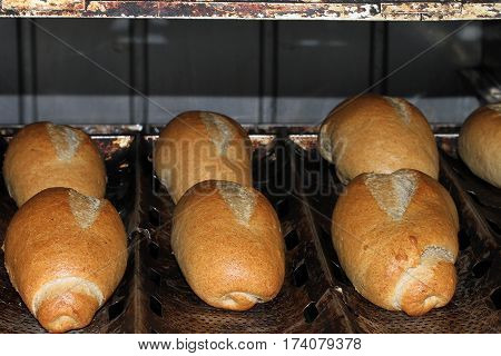 French bread whole meal flour  Organic, Wheat