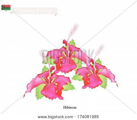 Vanuatu Flower Illustration of Hibiscus Flowers. The National Flower of Vanuatu.
