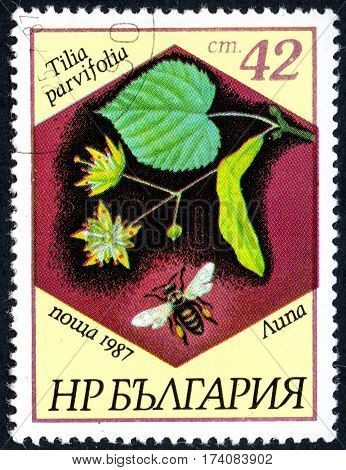 UKRAINE - CIRCA 2017: A stamp printed in Bulgaria shows the image linden and bee with the description Tilia parvifolia circa 1987