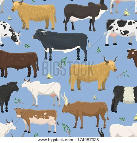 Set of bulls and cows farm animal cattle mammal nature beef agriculture and domestic rural bovine horned cartoon buffalo character vector illustration. Farming pasture horn design seamless pattern