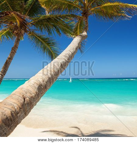 Tropical beach. Ocean waves, blue sky and palm trees background. White sand and crystal-blue sea. Ocean beach relax. Summer sea vacation