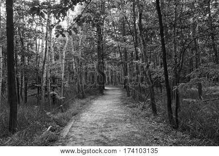 The natural park of Groane (Milan Lombardy Italy). Path. Black and white
