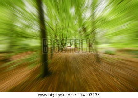 movement of perspective in the forest with fresh green leaves in spring