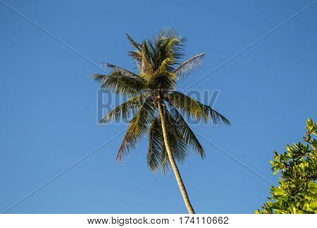 Coconut palm tree on sky background. Summer vacation banner template with place for text. Tropical nature minimal photo. Coco palm tree crown on blue sky. Palm tree leaves under sun. Paradise skyscape