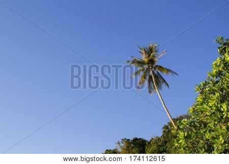 Tropical forest with palm tree on sky background. Summer vacation banner template with place for text. Exotic nature minimal photo. Coco palm tree crown on blue sky. Warm paradise island landscape
