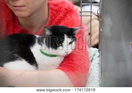 compassionate people handing out homeless cute cats