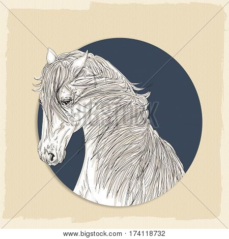 drawing of the head of a white horse with a thick mane and the old cream and blue background,
