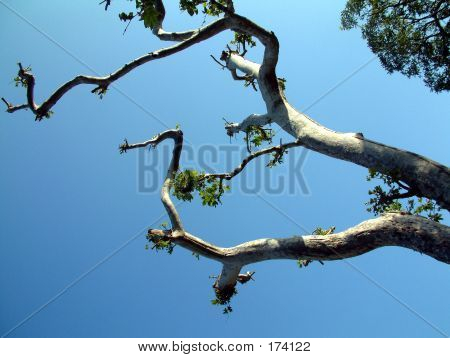 Tree Against A Blue Sky