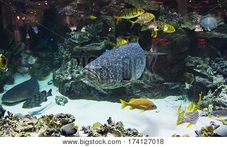 different and colorful fish in a big aquarium artificial with the natural scenery of the underwater world