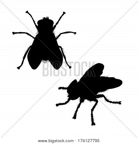 Fly web silhouette. Hand drawn image. Black white icon. Vector illustration. Logo desing.