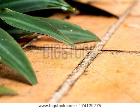 Ornamental plant and the earthenware tile floor