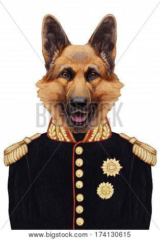 Portrait of German Shepherd in military uniform. Hand-drawn illustration, digitally colored.