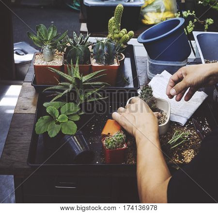 Man houseplant on the table gardening
