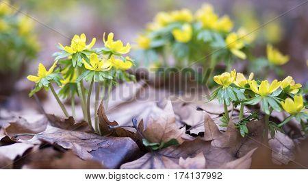 Beautiful spring flowers - website banner of springtime concept