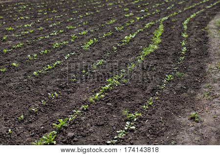 land on the field or in the garden young green sprout crops spring agriculture horizontal image