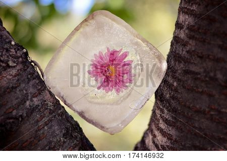 Pink Flower In Ice Stuck Amidst Tree Branch