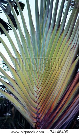 Colorful palm prongs that mimic the sunset