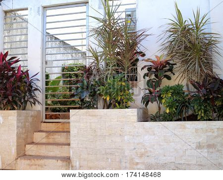 Plants on front porch with sleeping dog behind gate
