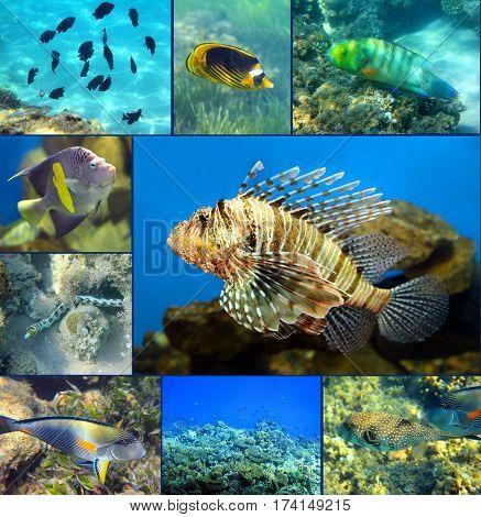 Red Sea underwater coral fish set