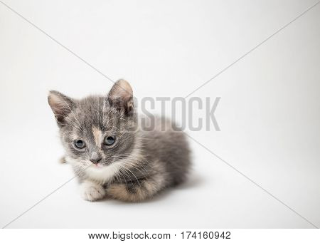 Little a lonely kitten tricolor lies quietly and looking with sad eyes on a white background