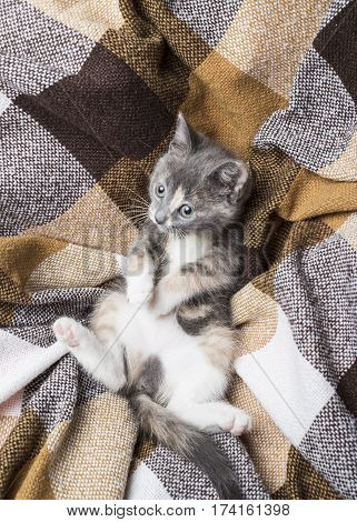 Little cute is not pedigreed kitten lies on a plaid