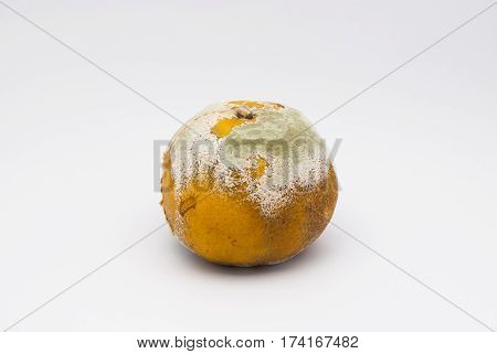 Closeup to Bad Smell Rotten Orange on White Background/ Isolated
