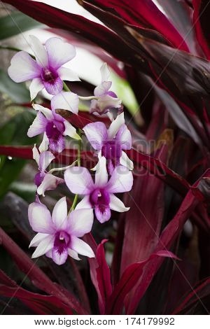 Bright Pinkish White Blooming Orchids