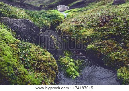 Valley National Park Landmannalaugar. Magnificent Iceland in the August. juicy green Icelandic moss and the creek