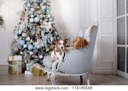 Dog In The Scenery, The Holiday And The New Year, Christmas, Holiday And Happy