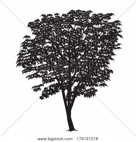Chestnut silhouette with leaves on a white background