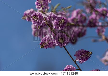 Beautiful purple flowers in the midle of spring