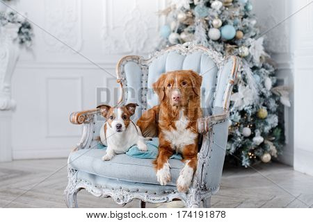 dog in the scenery the holiday and the New Year Christmas holiday and joy
