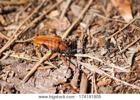 yellow beetle crawling on ground close up