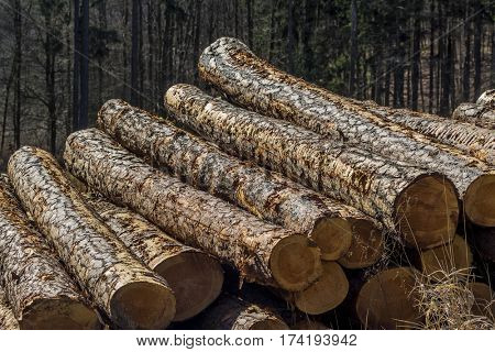 reversed-cut tree trunks
