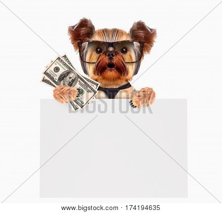 Funny dogs wearing tie and glasses holding bundles of money and white banner. Business concept