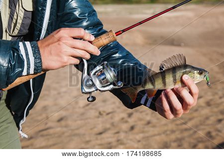 Fisherman holding a bass in his hand and spinning the coil. Fish caught on jig lure. Ultralight spinning in fisherman hand. Fisherman in nature background with fish