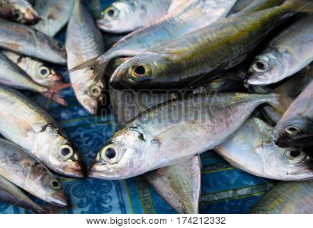 Bunch of sea fishes on wooden table. Fresh sea fish for sell. Small mackerel pile top view photo. Mackerel image for product package or food design. Raw fish cooking ingredient. Seaside food for cook