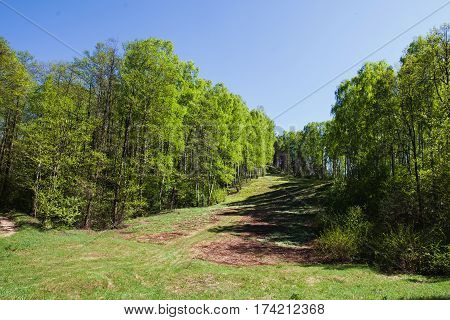 Juicy green leaves on the spring trees. Spring landscape. The sun shines brightly in the clear blue spring sky. Snowdrops on the ground in spring. White spring flowers. Beautiful spring trees