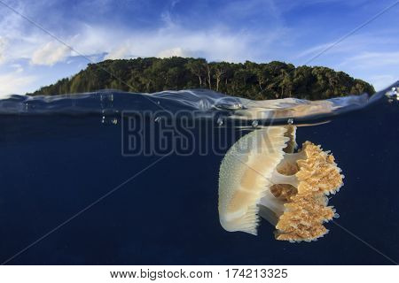 Jellyfish underwater and island. Half and half over under split image. Island, Sea and Sky