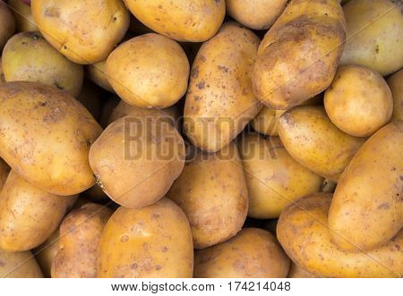Bunch of potato close photo. Brown and yellow vegetables image. Vegetarian shop display image. Picture of raw potato cooking ingredient. Vegetable for garnet. French fries or mashed potato ingredient
