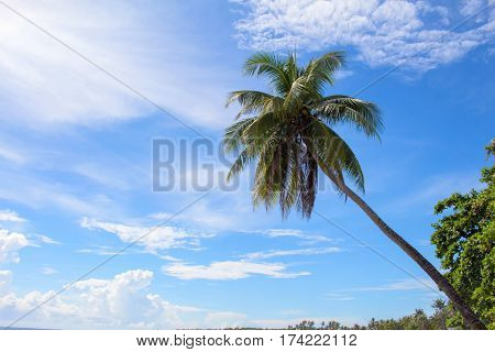 Palm tree and blue sky minimal travel banner template. Cloudy blue sky with coco palm tree silhouette. Tropical island nature photo. Exotic landscape for summer vacation. Tropical holiday concept
